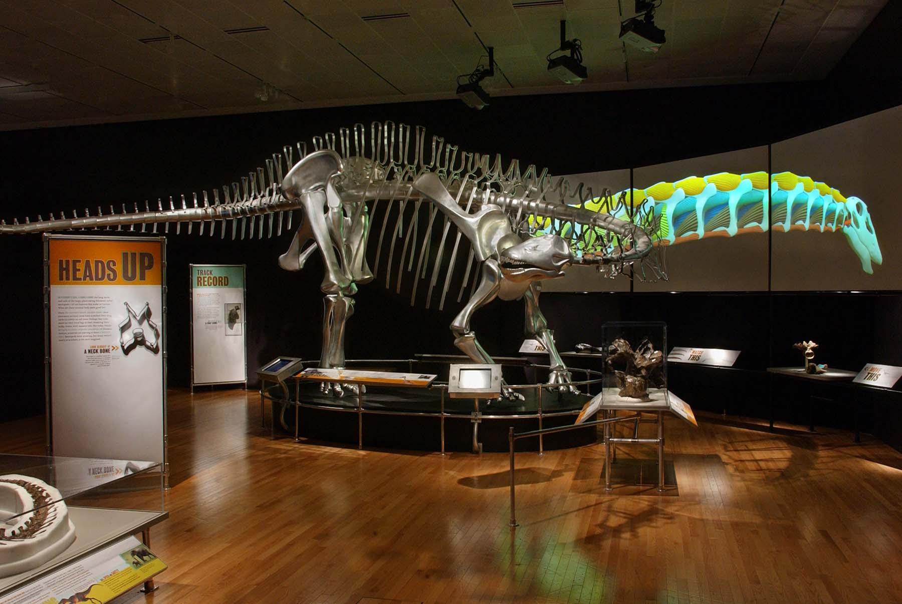 Museum Of Natural History Mick Ellison