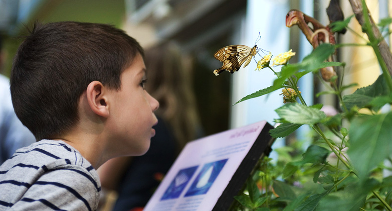 Picture of a boy in the Butterfly Garden