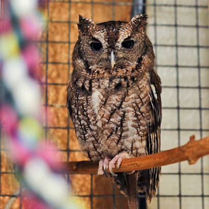 Live Animal Care Center Owl