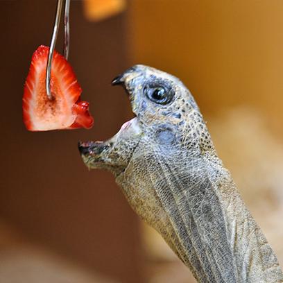 Live Animal Care Center Tortoise