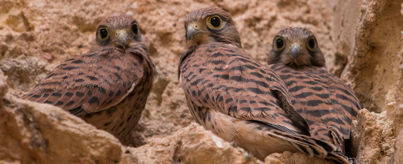 public://images/main/uploads/slides/Pulsar-Birds-LP.jpg