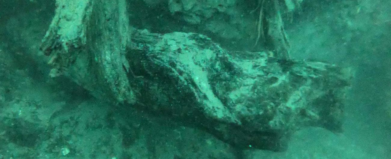 public://images/main/uploads/slides/Pulsar-UnderwaterForest-LP.jpg