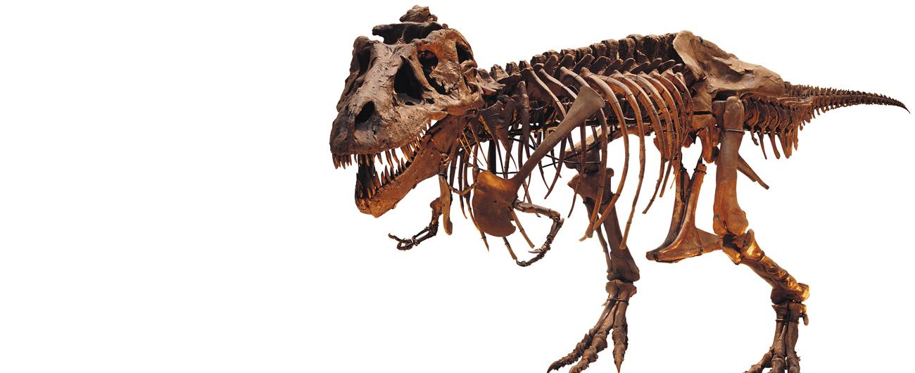 T. rex Sue