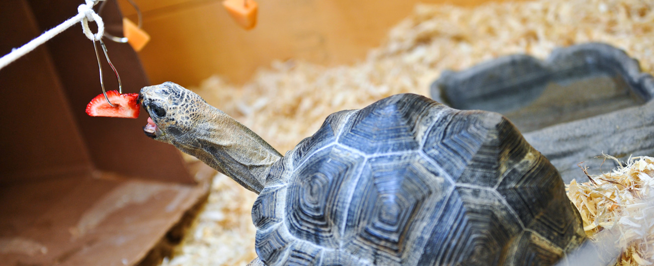 Turtle at the Live Animal Care Center