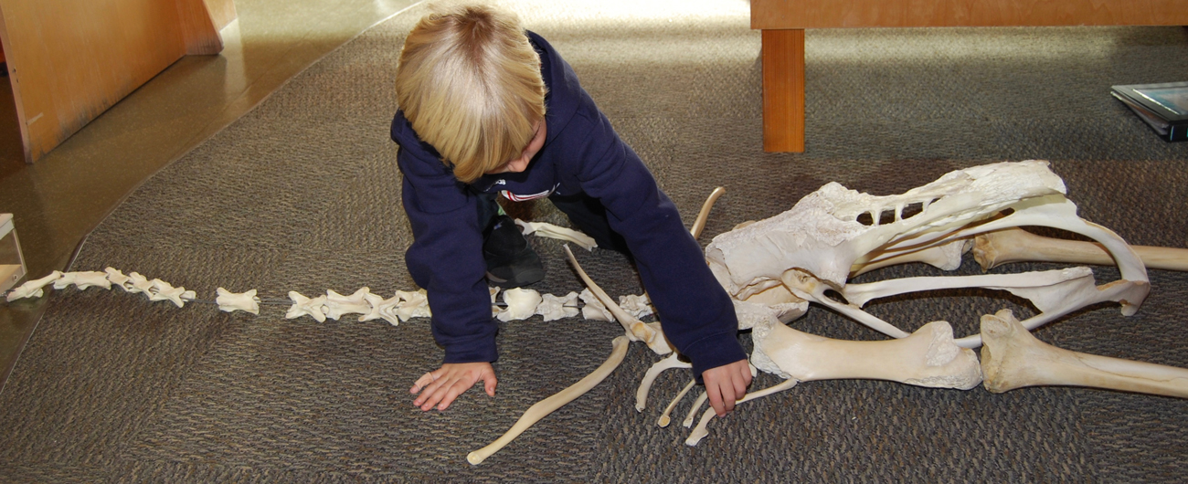 Discovery Center Skeleton Activity