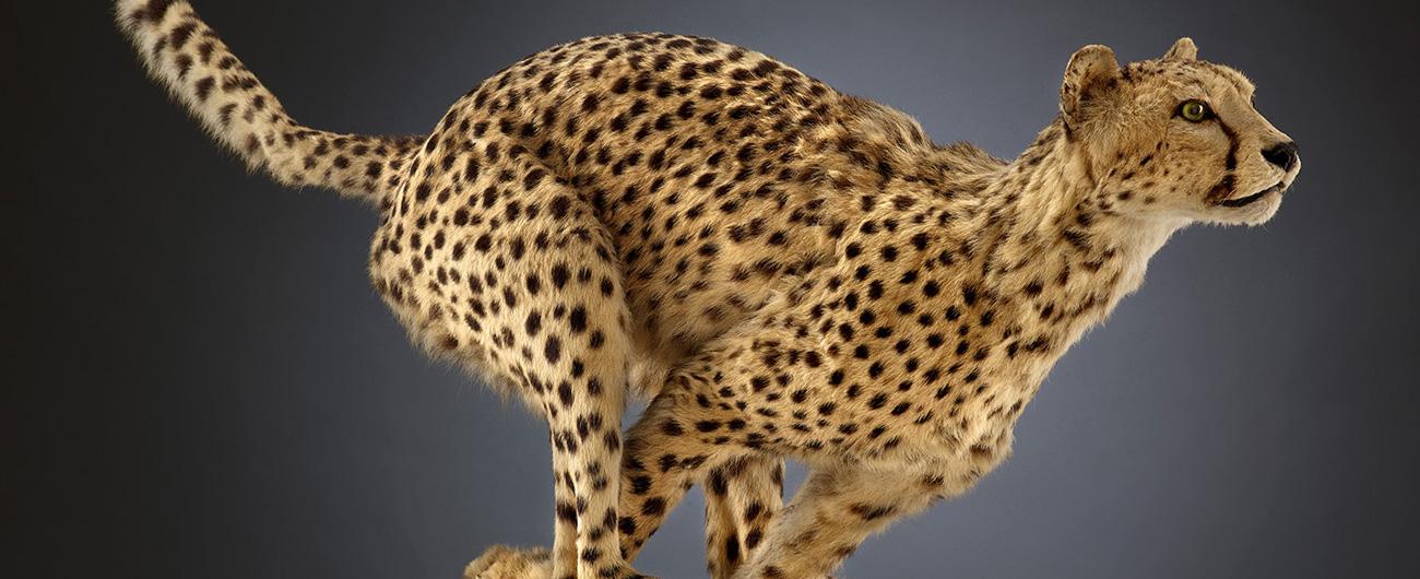 Animals: Machines in Motion