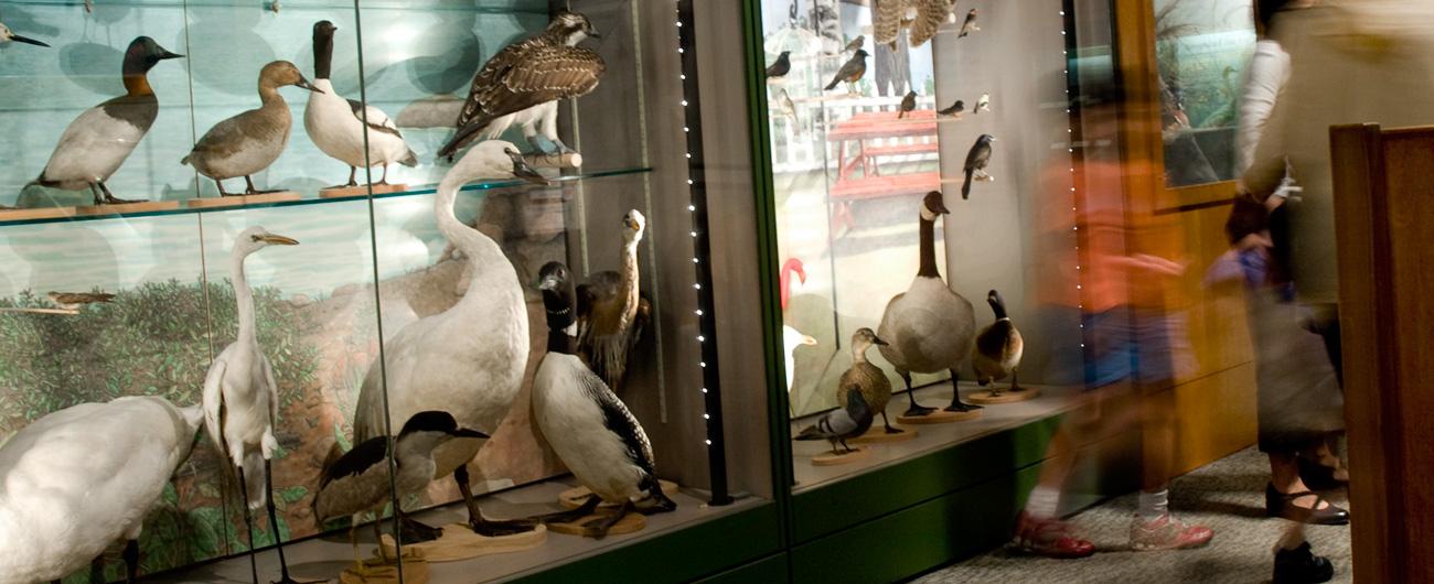 A Bird's World exhibit