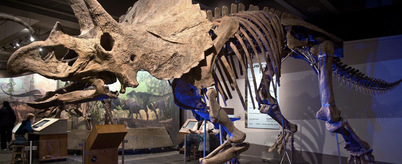 Museum Of Natural Science Events