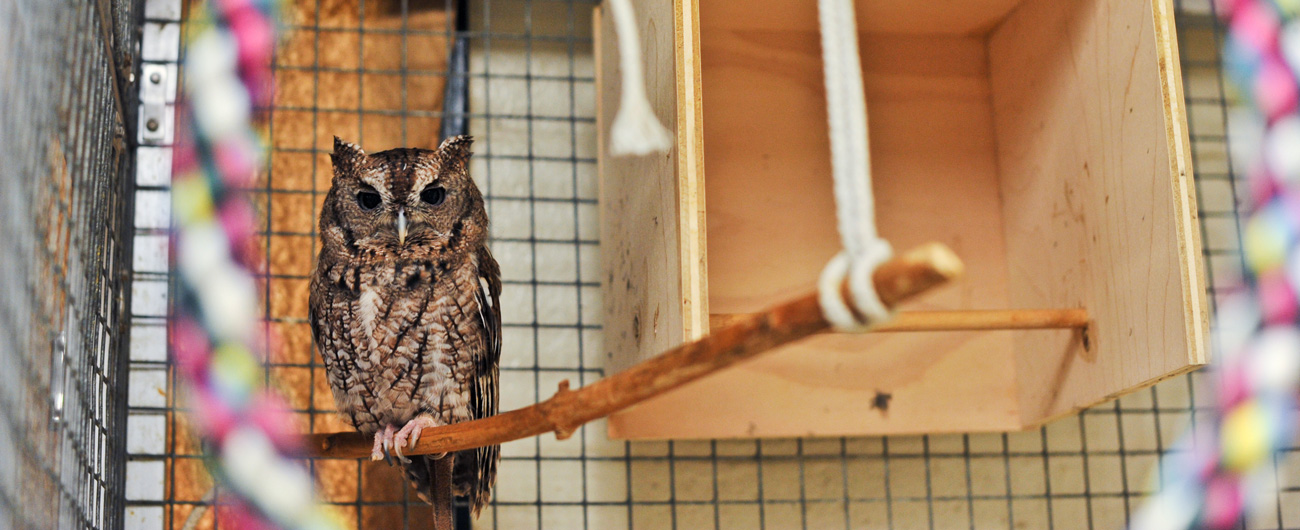 Photo of owl at the Live Animal Care Center