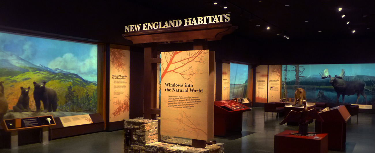 New England Habitats exhibit