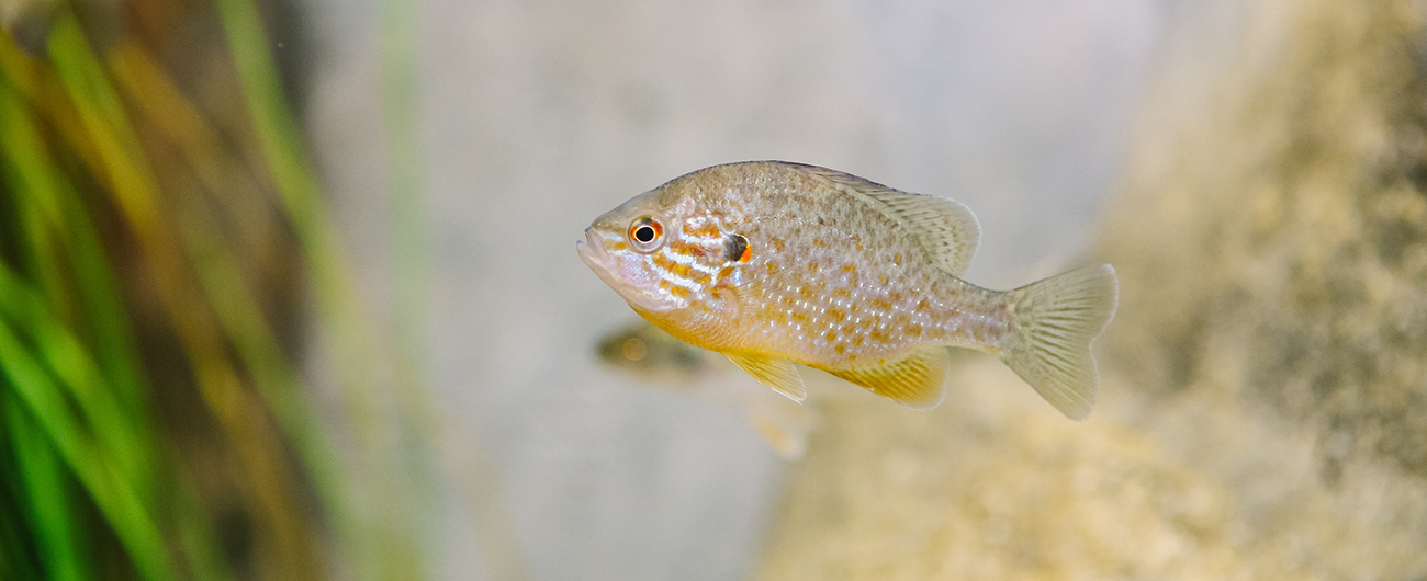 Fish in the Yawkey Gallery