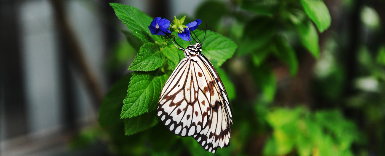 Butterfly and Caterpillar Weekend