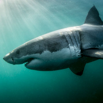 Shark: A 4-D Experience
