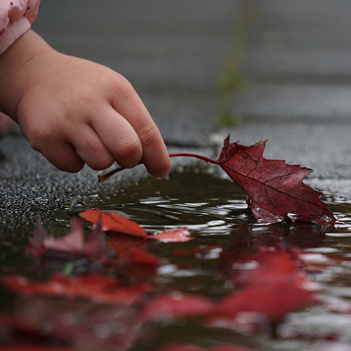Child's hand plucking a leaf from a puddle