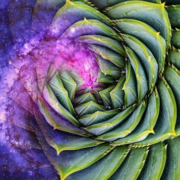 Fibonacci spiral with succulent