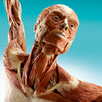 BODY WORLDS & The Cycle of Life: Educator Exhibit Experiences