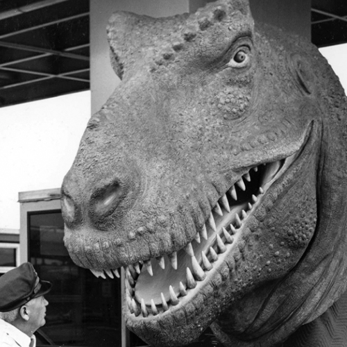 Archival black and white photograph of the head of the old t. rex model being delivered.
