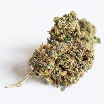 A Reno Family Foundation Symposium – Killing Cancer with Cannabis