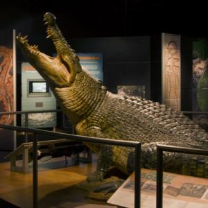 Crocs: Ancient Predators in a Modern World