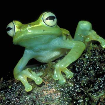 More to Explore in Frogs: A Chorus of Colors
