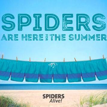 Spiders are here for the summer