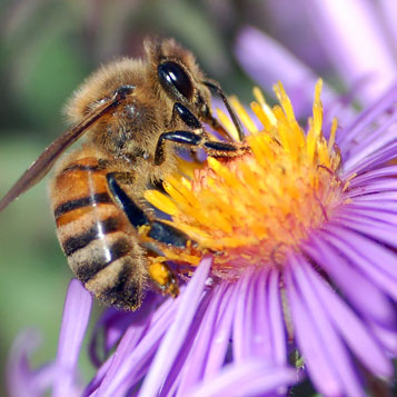 Afternoon Report: Declining Bees and Our Food Supply