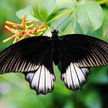 Butterfly Garden Experience