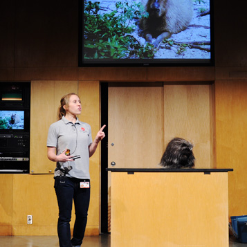 Live Animal Presentation picture