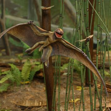 Jeholopterus ningchengensis. This model of Jeholopterus ningchengensis, a small pterosaur covered with hair-like structures, is featured in the exhibition Dinosaurs: Ancient Fossils, New Discoveries, opening June 5, 2011, at the Museum of Science, Boston. Photographer: Craig Chesek