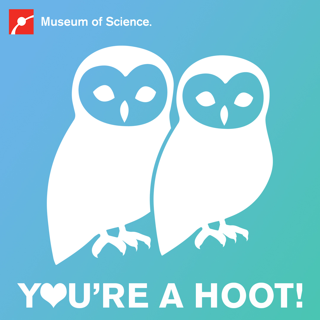 You're a hoot!