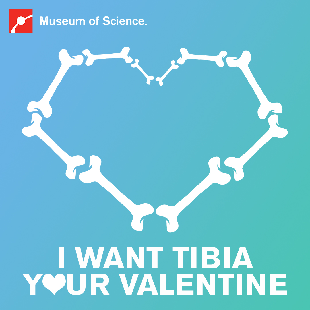 I want tibia your valentine
