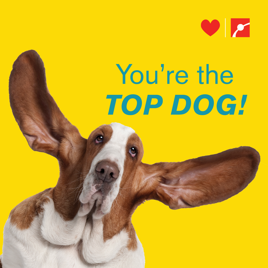 You're the TOP DOG!