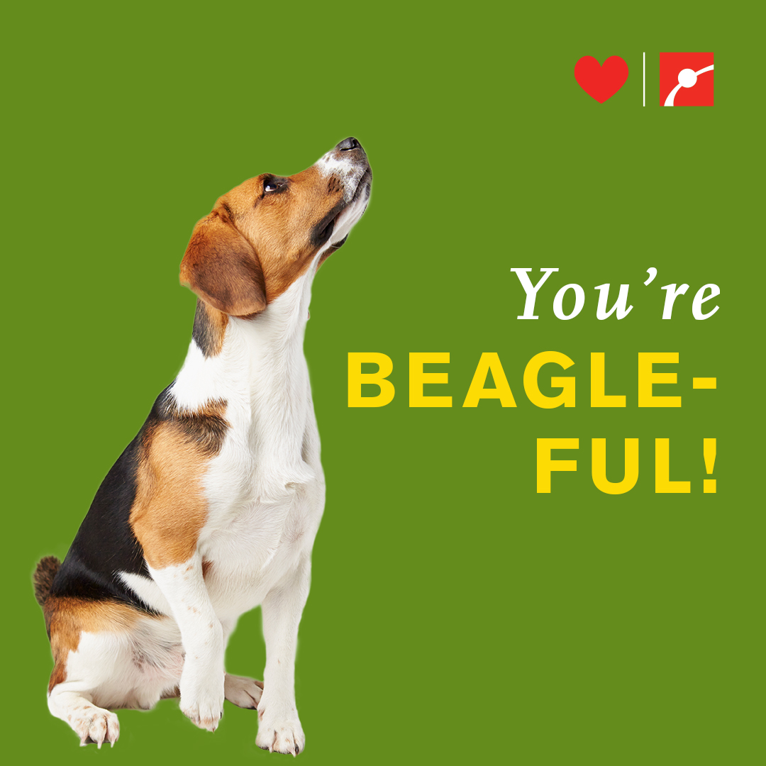 You're BEAGLE-FUL!
